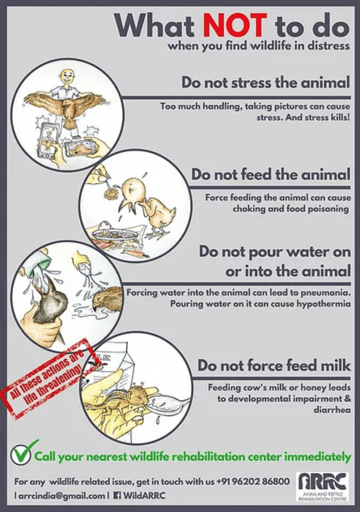 What not to do when you find wildlife in distress