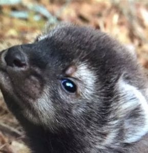 Our mystery baby was a fisher cat. We named her Carrie
