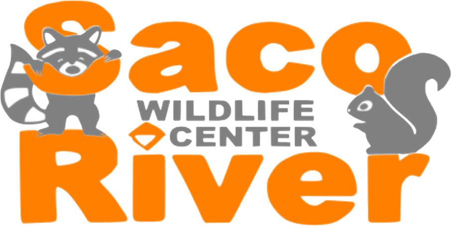 Saco River Wildlife Center